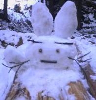 snowusa.JPG